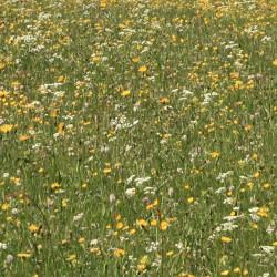 Prairie permanente bio - 7 à 10 ans